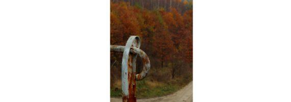 FOTO-AKCJA: Jesień w lesie – wynik