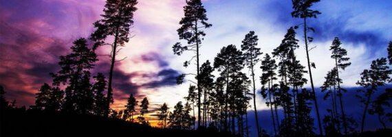 """""""Opowieści ze Stumilowego Lasu. Między nocą a dniem"""" – wystawa fotografii przyrodniczej"""
